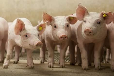 saneringsregeling varkenshouderij